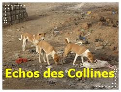 Kédougou : Les chiens errants dictent leur loi en attendant Macky