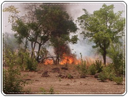 Kédougou : SOS Le village de Missirah Dantila, ravagé par un incendie