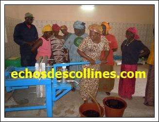 Kédougou : Le Karité, une filière d'avenir pour les femmes