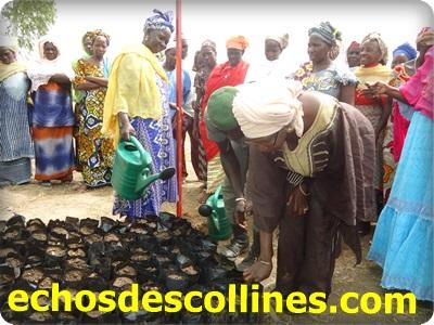 Kédougou: Vers une pépinière de Karité pour les femmes de Kénioto