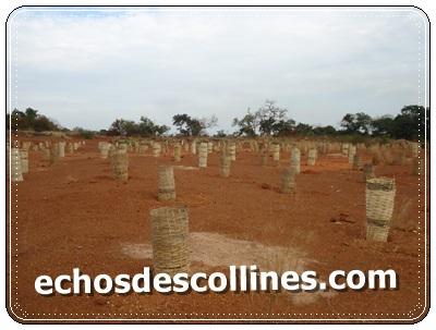 Kédougou: Qui détruit 1ha de terres restaure 1ha de terres…