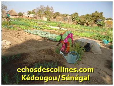 Kédougou: A quand la fin de la souffrance des habitants de Fadiga?