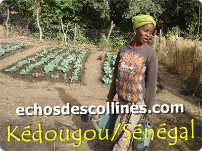 Kédougou : Les femmes de Thiokéthian en croisade contre la malnutrition