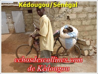 Kédougou: Ejecté des diouras, il cherche fortune ailleurs