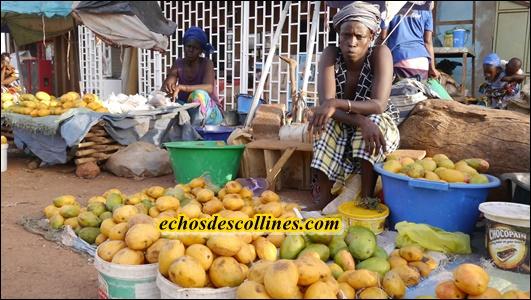 Kédougou ne sent pas le PSE, les mangues de Fongolimbi pourrissent