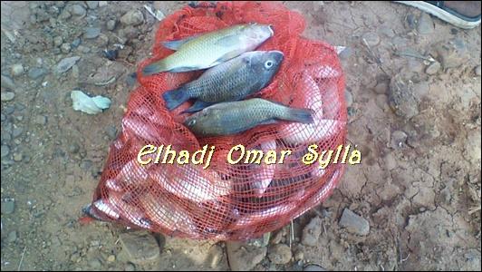 Kédougou: Alerte! Des poissons échouent sur les rives du fleuve Gambie