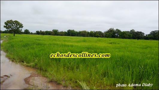 Kédougou: Campagne agricole 2015-2016 plus de 1000 tonnes de semences de riz attendues