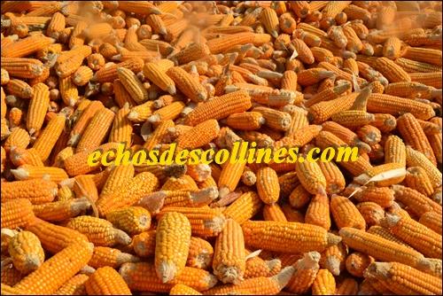 Kédougou: Cet agriculteur produit chaque année au moins 30 tonnes de ….
