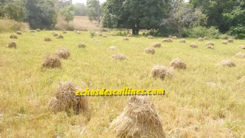 Kédougou: Le PADAER et le P2RS montrent quelques résultats de l'accompagnement aux producteurs…
