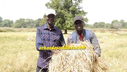 Salémata: Un fort potentiel de bassins rizicoles disponibles, des producteurs encore sous-équipés