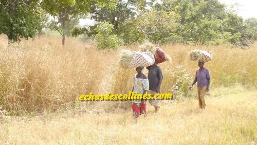 Gouverneur William Manel: «Avec le PRACAS, les rendements ont triplé à Kédougou»