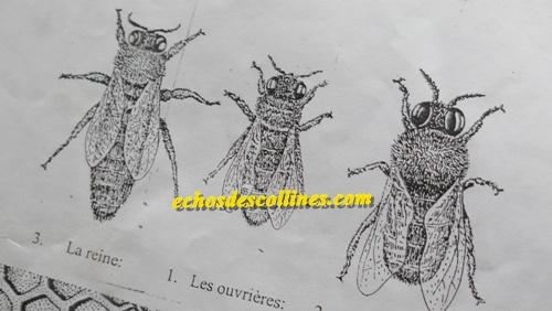 Kédougou: Le P2RS va bâtir une miellerie, unité de traitement de miel à…