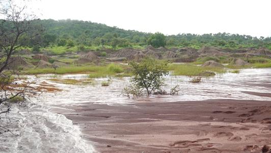 Tenkoto Bélédougou: Des burkinabés détruisent l'environnement, personne ne dit rien…