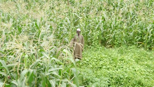 Kédougou: Moi, El hadj Abdoul Ngagna Touré 57 ans, ma passion, l'agriculture
