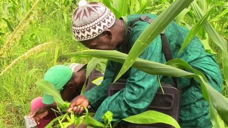 Kédougou: La DRDR et le PADAER sont en croisade contre la chenille légionnaire d'automne