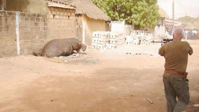Regardez la fin tragique d'un hippopotame (vidéo)